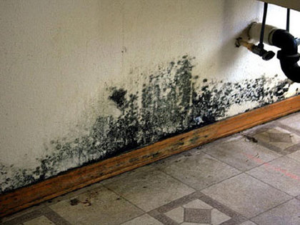 What Is Black Mold The Dangers Of Black Mold