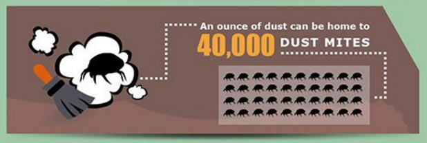 dust mites.png